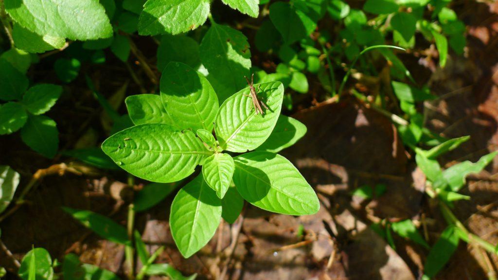 Biodiversität auf der Plantage