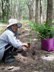 Kautschuk-Kleinbäuerin lächelt und hält einen Baumsetzling in der Hand und ist kurz davor ihn einzupflanzen